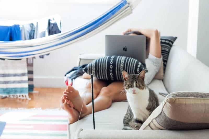 can I rent a cat?