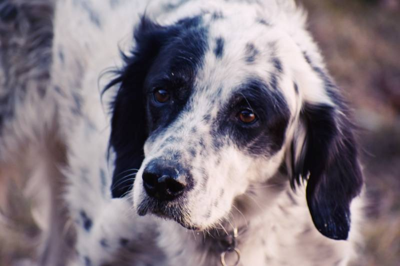 Causes Of Heart Disease In Dogs