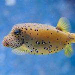 How To Treat Swim Bladder Disease In Fish