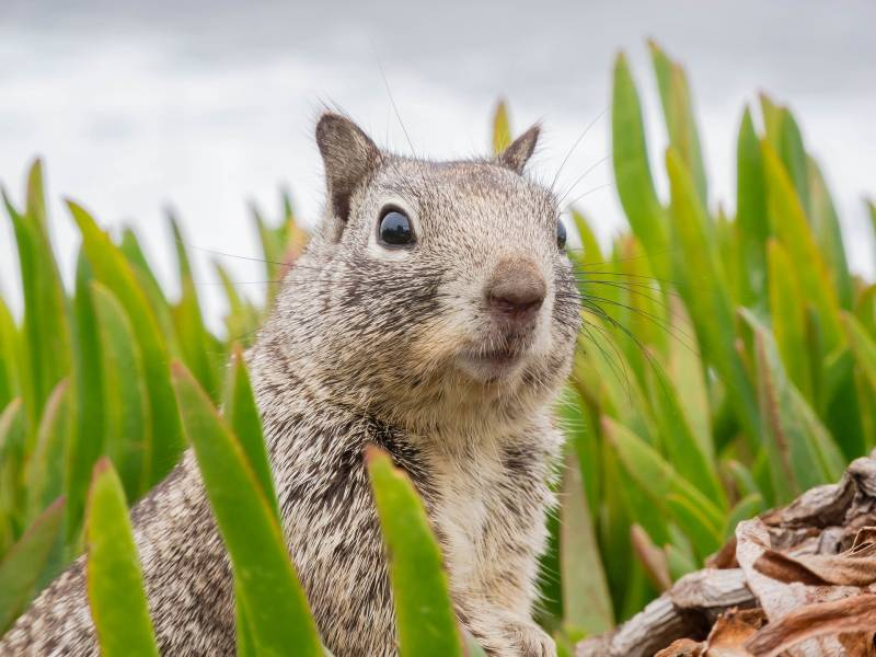 Reasons Squirrels Make So Much Noise