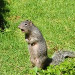 Why Squirrels Make So Much Noise? Now We Know!