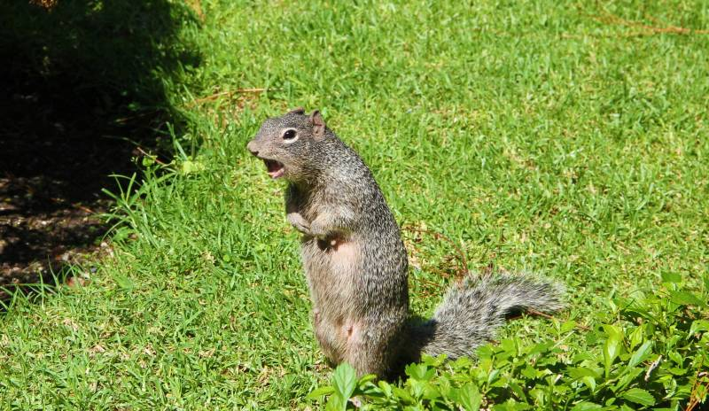 Why Squirrels Make So Much Noise