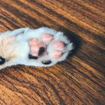 Cat Paw Pads Turning Black – Why?