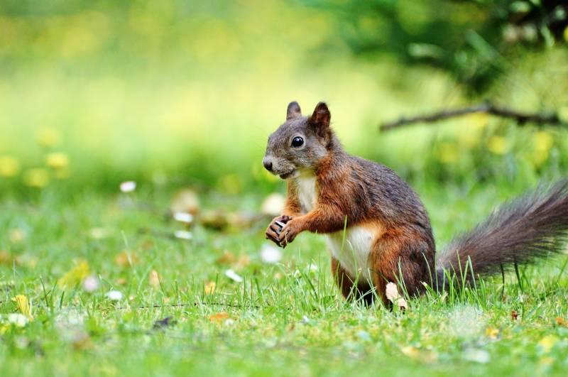Reasons Squirrels Bury Nuts
