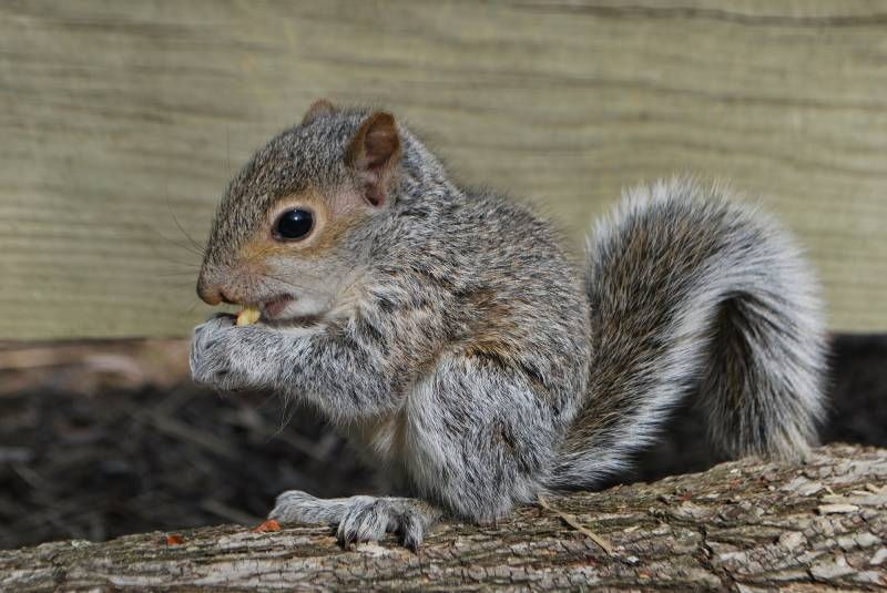 Reasons Squirrels Move Their Babies