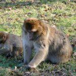 Why Do Monkeys Bite Their Babies?