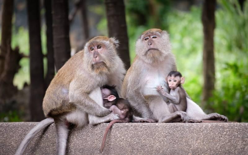 Why Do Monkeys Bite Their Babies