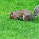 Why Do Squirrels Bury Nuts - Interesting Facts