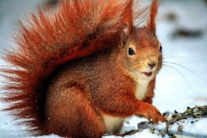 Why Do Squirrels Cry