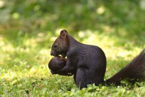 Why Do Squirrels Move Their Babies