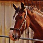 Why Do Horses Crib?