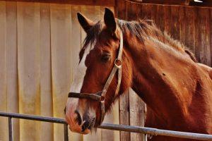 Reasons Why Horses Crib