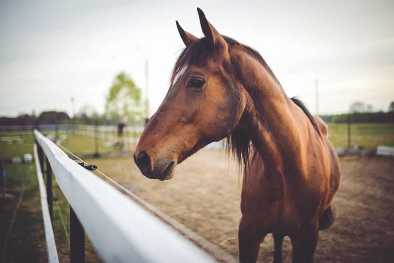 Why do Horses Crib