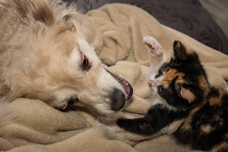 Reasons why cats hiss at dogs