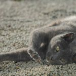 Is Declawing Cats Bad? Pure Facts