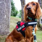 What Do Therapy Dogs Do? - Therapy Dogs Explained