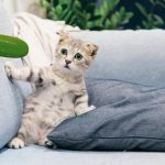 Why Are Cats Afraid Of Cucumbers? Now We Know!
