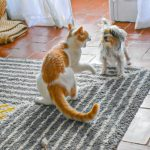 Why Do Cats Hiss At Dogs? Some Reasons May Surprise You!