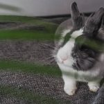 Why Does My Rabbit Bite My Clothes? [9 Reasons]
