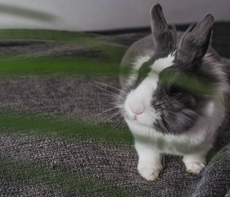 Why do rabbits bite your clothes