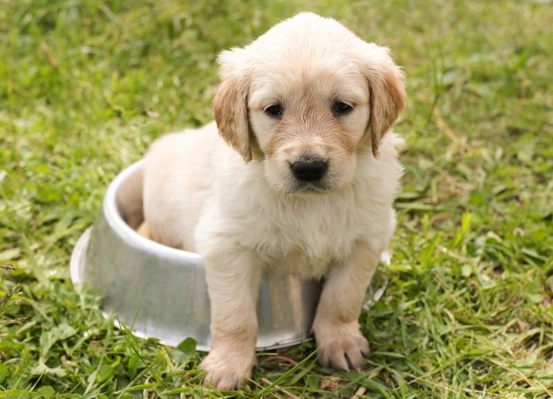 Why is my newborn puppy constipated?