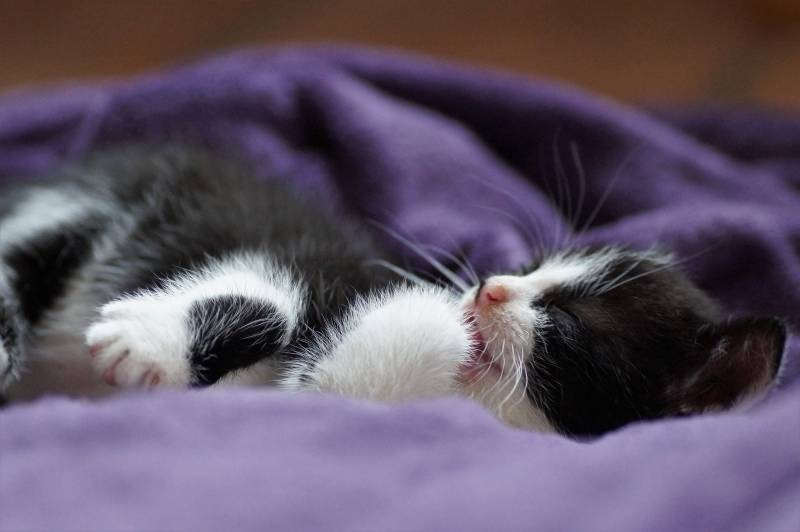 cat sleeping with mouth open – causes