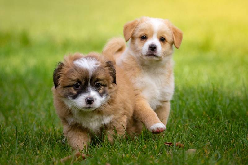 newborn puppy constipated – causes & how to help