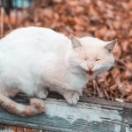 11 Reasons Your Cat Is Chewing On Nothing