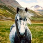 Dying Horse Hair – Is It A Good Idea? How To Do It?