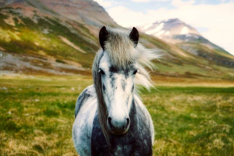 Dying Horse Hair – How To Do It?