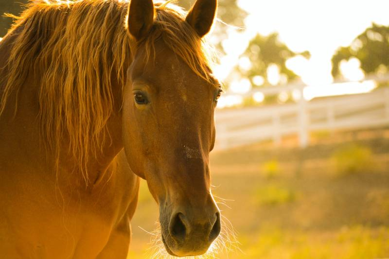 Dying Horse Hair – Is It a Good Idea?
