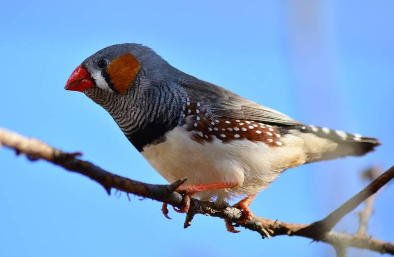 Places where finches live