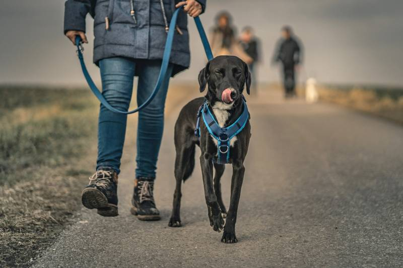 What to do if unleashed dog attacks leashed dog