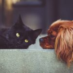Do Cats Like Dogs? - All You Need to Know
