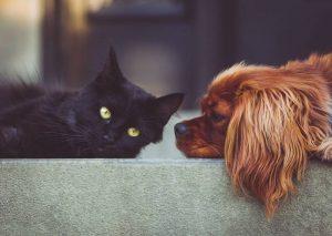 Do cats like dogs
