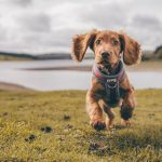 How to Get a Dog License? – Guide