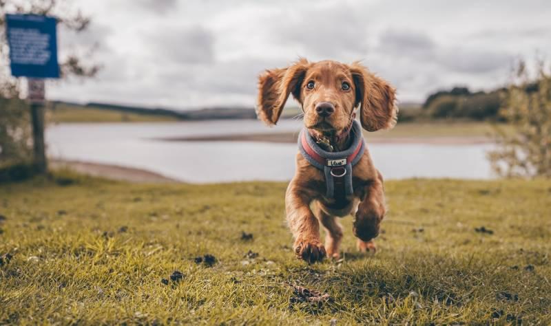 Getting A Dog License