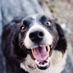 Why does My Dog Hump and Bite Me – Reasons Explained