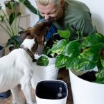 Why Does My Dog Lick Inside My Mouth? Surprising Causes